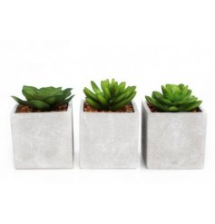 Add a touch of Contemporary to any interior with this chic assortment of potted artificial succulents
