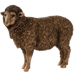 A fine quality, country living sheep ornament from the popular bronze reflections range. A charming gift
