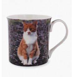 A fine quality ginger cat mug with gift box.