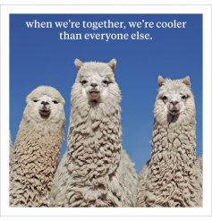 When we're together we're cooler than everyone else. A fine quality photographic card with humorous slogan.