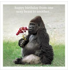 Happy Birthday from one sexy beast to another. A humorous slogan card with animal photographic image.