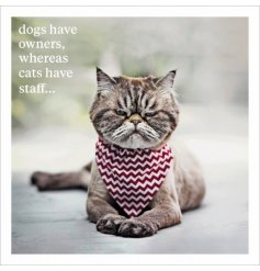 Dogs have owners, whereas cats have staff. A humorous and unique greetings card with photographic image and slogan.