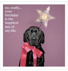 No really...your birthday is the happiest day of my life. A humorous sentiment slogan greetings card with photo image.