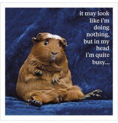 A humorous slogan card with an animal photographic image. Ideal for gifting for many different occasions.