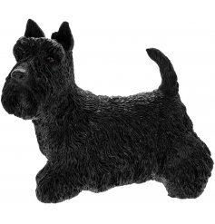 Scottish Terrier Leonardo dogs are solid resin figures finished to a high standard.