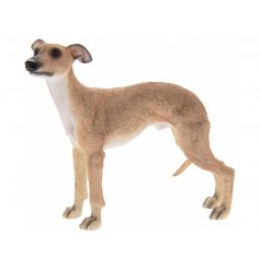 Tan Whippet Leonardo dogs are solid resin figures finished to a high standard.