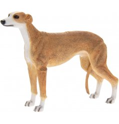 Tan Greyhound Leonardo dogs are solid resin figures finished to a high standard.