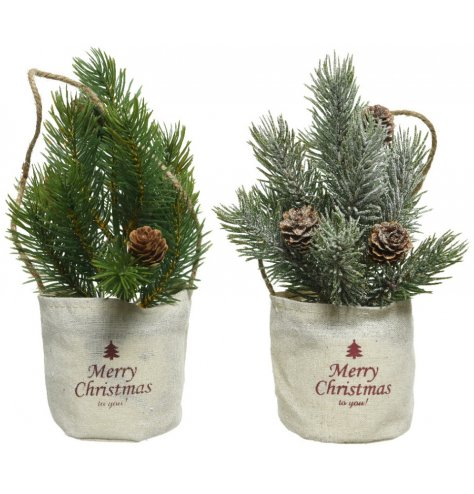 Assorted artificial Christmas trees in frosted and standard finishes. Each is adorned with miniature pinecones