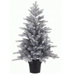 Frosted Grandis Mini Tree  A charming little Grandis Fir Tree in a grey frosted setting