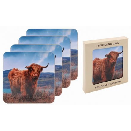 Grazing Highland Cow Coasters