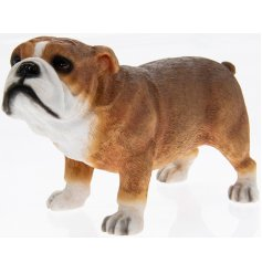 Brown Bulldog Leonardo dogs are solid resin figures finished to a high standard.