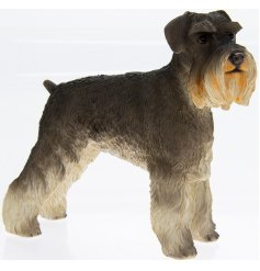 Schnauzer Leonardo dogs are solid resin figures finished to a high standard.