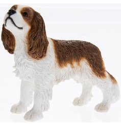 Cavalier King Charles Spaniel Leonardo dogs are solid resin figures finished to a high standard.