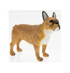 Tanned French Bulldog Leonardo dogs are solid resin figures finished to a high standard.