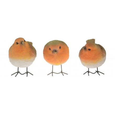 Assorted Posed Robins