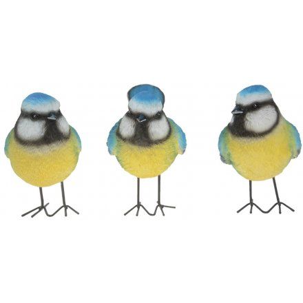 Assorted Posed Blue Tits