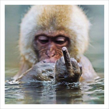Monkey Business Greetings Card