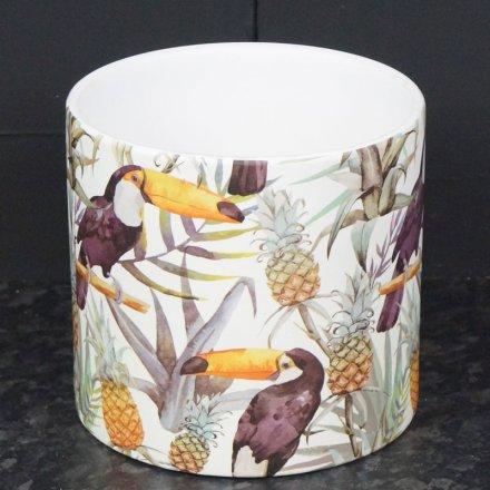 11cm Tropical Toucan Pot