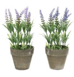 A mix of 2 potted Artificial Lavender Plants complete with added leaves and a distressed feature