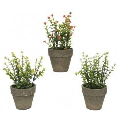 A mix of Artificial Potted Plants, each set with its own delicate colour