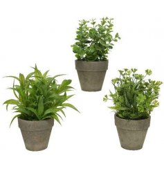 A mix of Artificial Potted Shrubs, each set with its own form