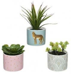 An assortment of succulents potted in a quirky range of ceramic based pots