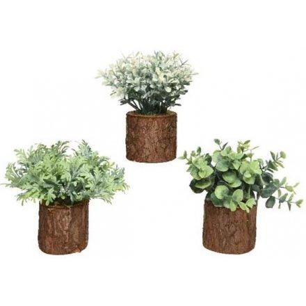 Bark Pot Succulents, 3asst