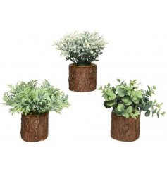 A mix of greenery shrubs potted in bark based planters