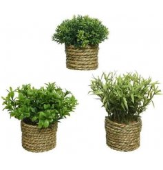 An assortment of artificial succulents, each set within a natural dried grass woven pot