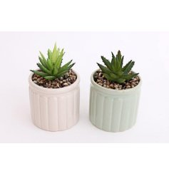 A mix of small potted succulents, perfect little accessories for any windowsill