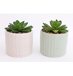 Assorted by their sage green and white pot tones, these potted succulents will place perfectly on any windowsill or shel