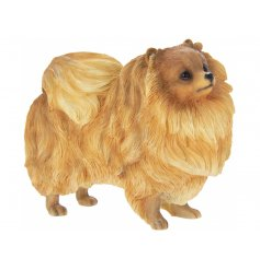 Attractive polyresin ornament of an orange coloured pomeranian dog, giftboxed. Measures approx 13 x 7 x 10 cm high
