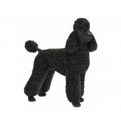 Attractive polyresin ornament of a black coloured Poodle dog, giftboxed. Measures approx 16 x 7 x 15 cm