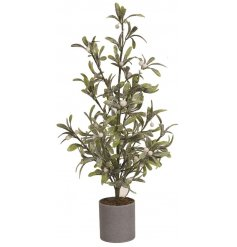 A traditional potted mistletoe decoration, perfectly set with a shimmery glitter coating