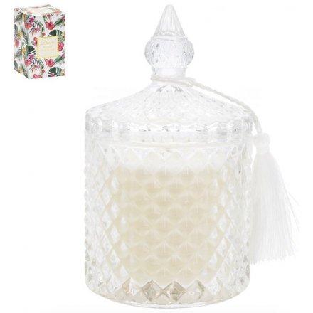 15 cm Large Desire Tropical Candle Jar - Tropical Citrus & Sage