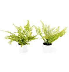 A mix of 3 similar artificial fern plants placed in simple white pots