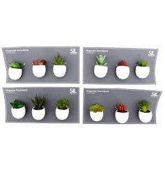A mix of quirky House Plant magnets, perfect for pinning reminders and memos around the home!