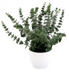A charming eucalyptus plant in a simple white pot to add a touch of colour to any room.