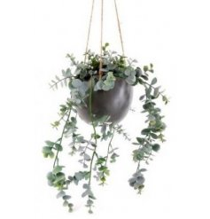 Sure to fit in any home themed home space, an artificial overgrown Eucalyptus plant in a hanging planter