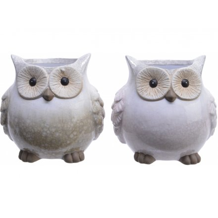 Assorted Smooth Terracotta Owl Pots, 13cm
