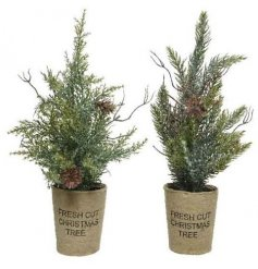 Sat in hessian bags with scripted text decals, these small artificial trees will fit perfectly in any home at Christmas
