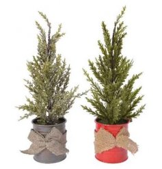Perfect for placing around any home at Christmas, an assortment of artificial mini trees in Nordic toned pots