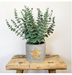 Stay on trend with this super stylish rough luxe cement planter with a gold painted star.