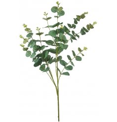 A long artificial stem of wild grown Eucalyptus Leaves