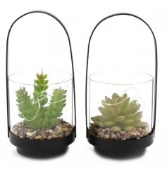 An assortment of on trend themed potted succulents within a black wire framed pot