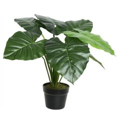 A fine quality artificial taro plant set within a stylish black plant pot.
