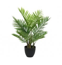 An on trend artificial palm tree plant with attractive black plant pot.