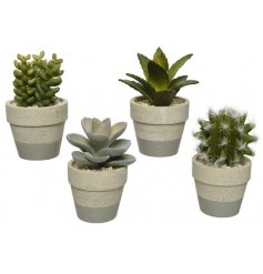 A mix of 4 artificial succulent plants set within grey and natural striped pots.