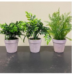 An assortment of 3 fine quality artificial fern plants, each set within a display pot.