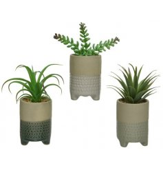 A mix of 3 artificial succulents potted into attractive stoneware pots. Each has a decorative glazed pattern and feet.